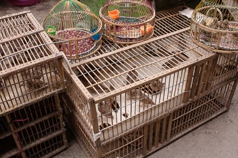 Wooden cages of sparrows on the floor in Ka Faroshi bird market